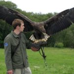 Eagles Flying Ballymote Sligo